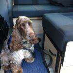 campervan-with-dog