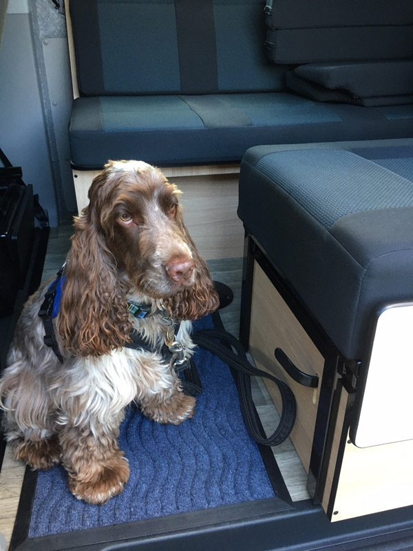 Charlie in the Capercaillie Camper